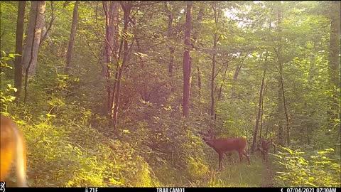 Bucks on the trail again