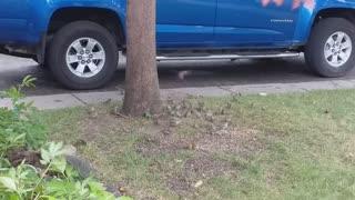 Birds invading the area