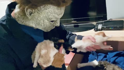 Michael Myers falls in love with a box of adorable Kittens