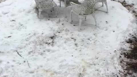 Dogs running in circles in snow