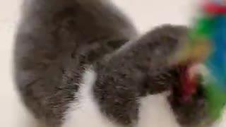 Cute Little Cat! <3