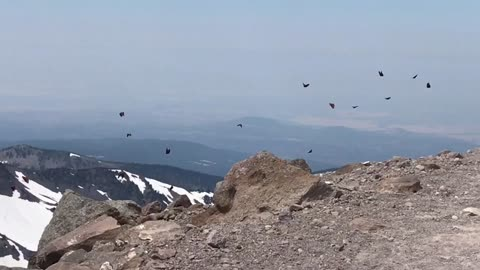 Rare Footage Of Massive Butterfly Migration