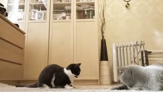The cat says to her husband, let's go to the room
