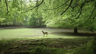 deer and camera