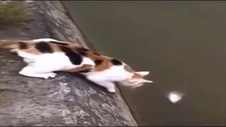 Watch how the cat caught the fish