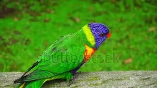 Funny Parrots Videos Compilation cute