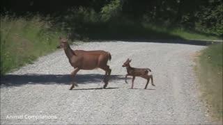 Baby Deer Fawn Jumping, Beautiful Deer Baby, Deer Video,
