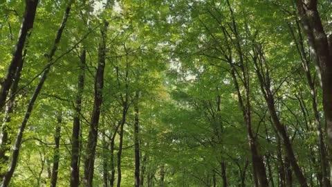 Beautiful Nature Stock Footage Royalty-Free #royaltyfree #nature