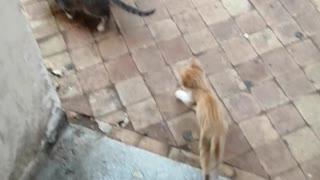 Funny cat videos 2020