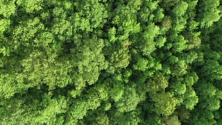 Bird eye view video from drone of a thick forest