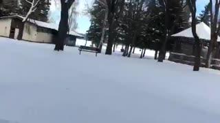 Ice Skating Through Trees