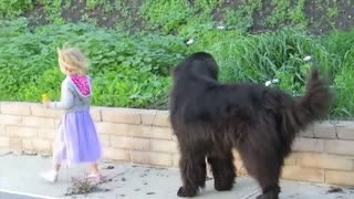 Dogs PROTECT children Children and dogs are best friends_nanny dogs funny collection