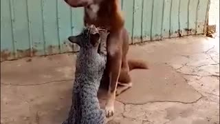 Kitty Gives Dog Delicate Massage