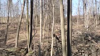 Just walking through budding woods pt4