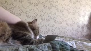 The cat purrs and plays