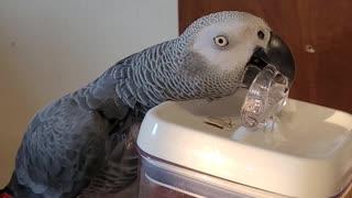 Smart Bird Breaks into Snacks