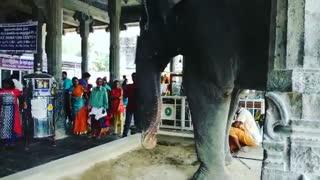 India The Sacred Elephant