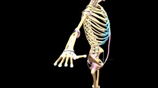 Wow!! Skeletal System