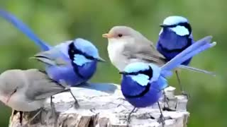 The most beautiful birds that I love