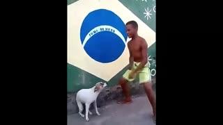 perrito bailando🤭