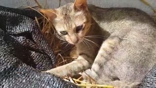 Cat Warming and Protecting Chicken Eggs