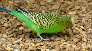 Beautiful colorful parrot waw