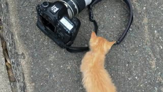 Cute kitten adorably plays with this person's camera