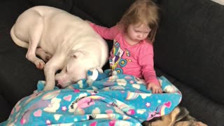 Child and Dogs Have a Cuddle Huddle