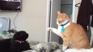Fastest Cat Slaps | Cat Fight