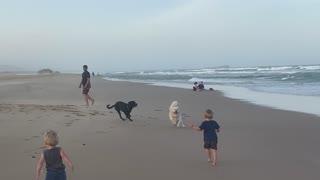 Dogs Bound Over Little Boy