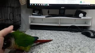 Cute Bird Loves Cuddles