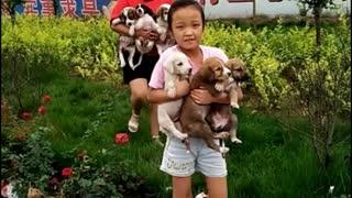 Cute shepherd