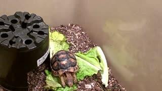 Greek turtle enjoy