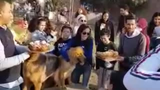 A dog's birthday party