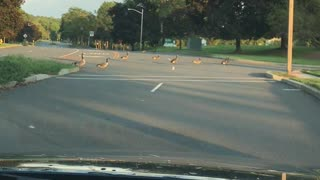 Antifa goose faction blocks road.