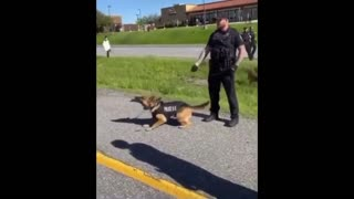 Protester gets bit by a police dog after antagonizing it