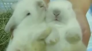 Rabbit helping his brother to wake up