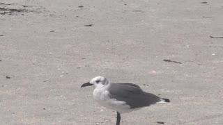 Beach Vibes Treasure Island Florida