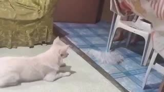 Dog playing with mop