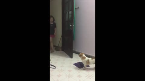 Funny dog reaction - watch till the end