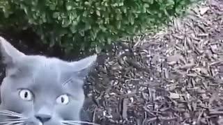 Baby cat _ Cat Cute