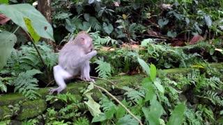 Amazing Baby Monkey Eating Flowers