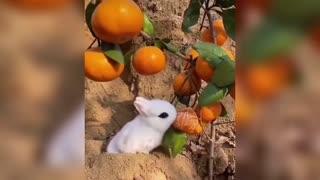 Amazing animal cute video