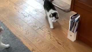 Cat scares other cat