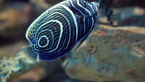 Ocean Fishes