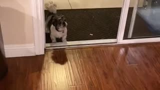 Elderly dog losing his vision, thinks glass door is closed