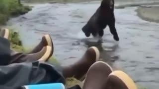A bear crossing a river