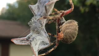 Hungry Spider