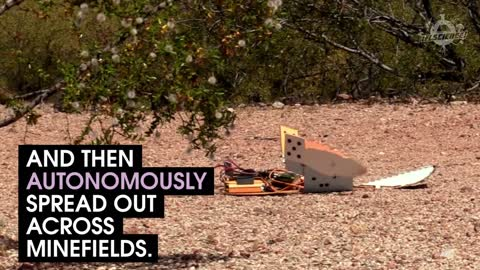 These Robotic Turtles Could Clear Minefields