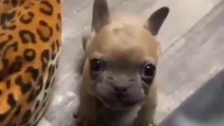 A talking puppy..